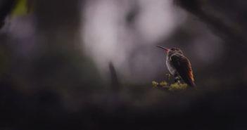 Il mio allenamento a casa: l'allenamento del colibrì